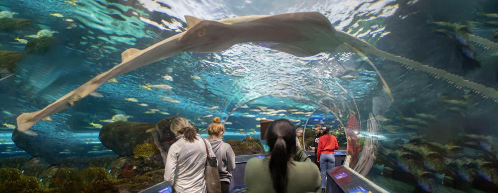 Toronto-Aquarium1